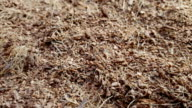 Dry coconut coir rotate on the table. video