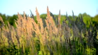 dry fluffy grass on a background of green leaves swaying in the wind video