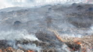 Dry grass burns and smokes on a strong wind video