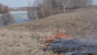 Dry grass burns on the river bank near the wood video