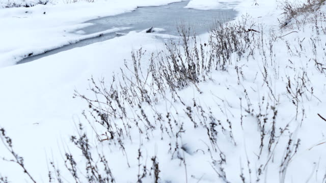dry grass in snow winter nature field landscape video