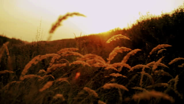 dry grass video