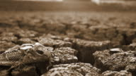 Dry Ground video