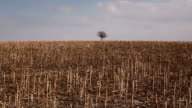 Dry Land video