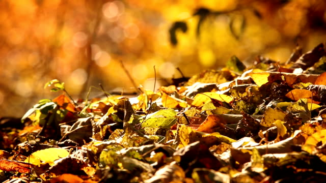 Dry leaves on the forest, autumn season. video