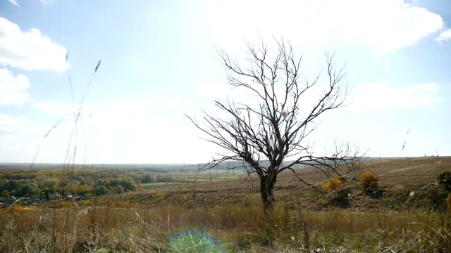 Dry lonely in the field tree on a background of blue sky autumn nature video