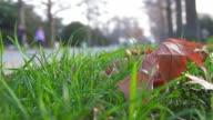Dry maple leaves on green grass in autumn park video