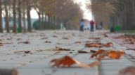 Dry maple leaves on road in autumn park video