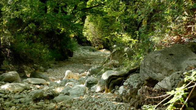 Dry Riverbed in Forest video