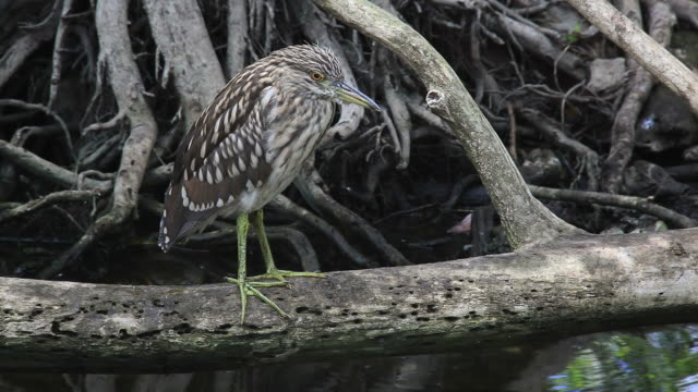 Dry season in the everglades video