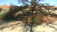 dry tree and ground - Namib_Trockenheit video