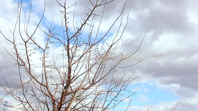 dry tree branches grass field nature landscape video