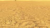 Dry tree in the desert video