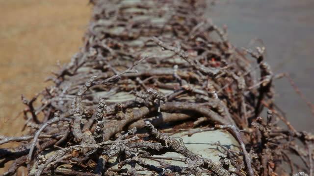 Dry tree roots entangle concrete border video