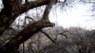 Dry Tree video