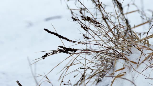 dry wind grass in snow winter nature field landscape video