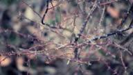 Dry Winter Rose Garden video