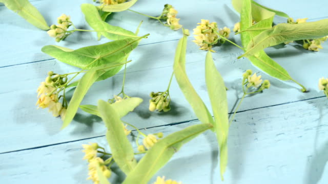 Drying linden flowers video