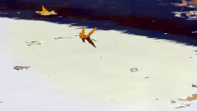 Dry,yellow leaves on the water. Autumn season. video