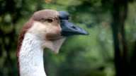 duck hunter video