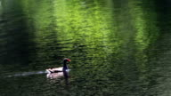 Duck in the river video