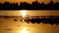 ducks at sunrise on the lake video