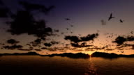 Ducks flying, timelapse sunrise with sea and mountain ridge video