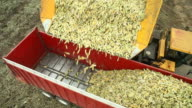 Dump Cart Dropping Harvested Sweet Corn into Semi Trailer video