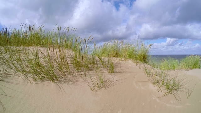 Dune of Sylt Nature reserve / Germany video