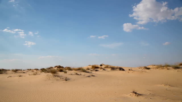Dunes with vegetation in the desert video
