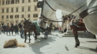 Duomo square in Florence: horses and tourists video