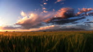 Dusk.  Bridger Mountain range, wheat field. Montana video
