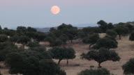 dusk in the meadow video