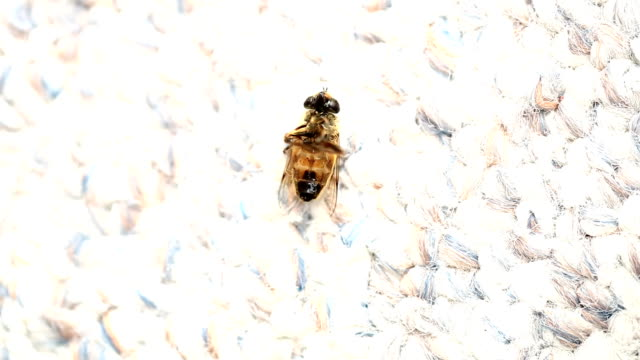 Dying Fly video