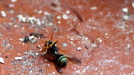 Dying Wasp on the Floor video