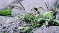 dying wasp walks around asphalt video