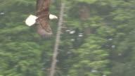 Eagle Swoop video