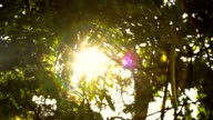 Early morning sun comes up through trees at sunrise. video