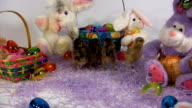 Easter Baby Chicks video