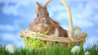 Easter basket with bunny sitting in grass video