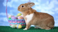 Easter bunny and basket with eggs video