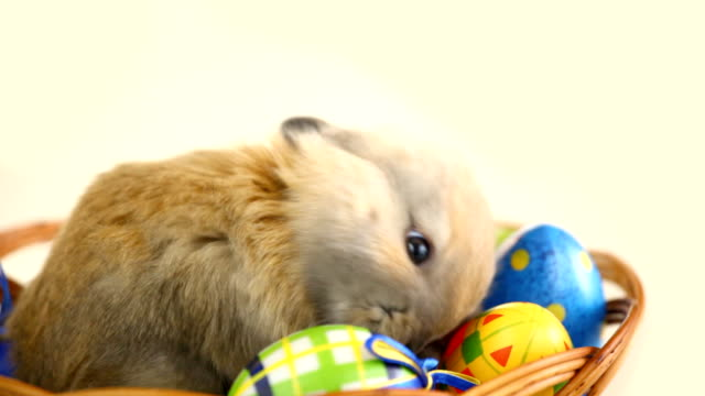 Easter bunny and eggs. video