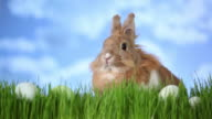 Easter bunny sitting in grass with eggs video