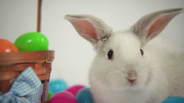 Easter bunny with basket and eggs video