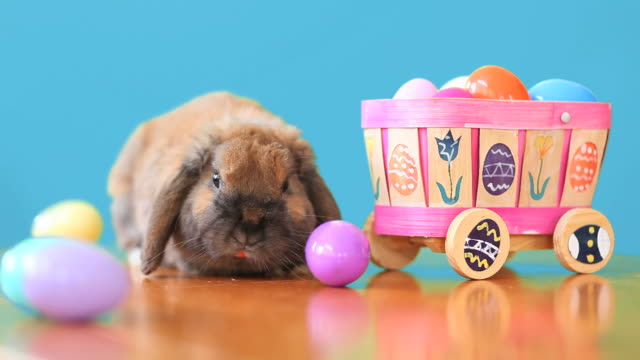 Easter Bunny With Blue Background video