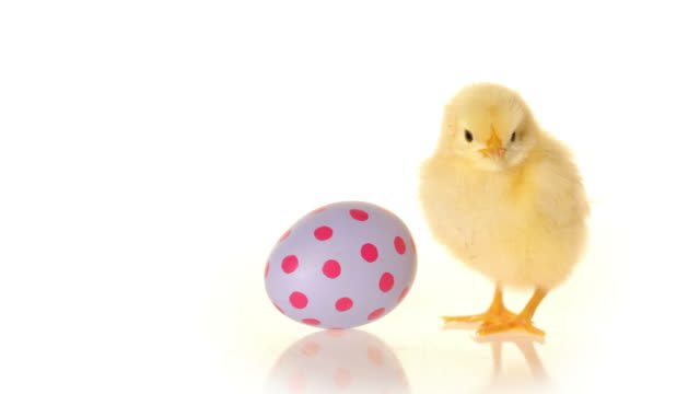 Easter egg and baby chick video