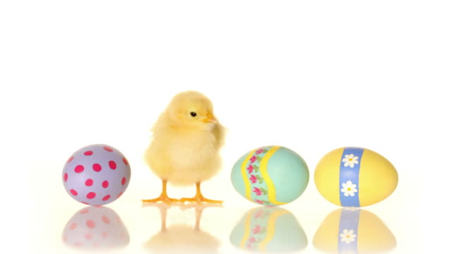 Easter eggs and baby chick video