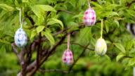 Easter eggs hanging on a tree, easter decoration video