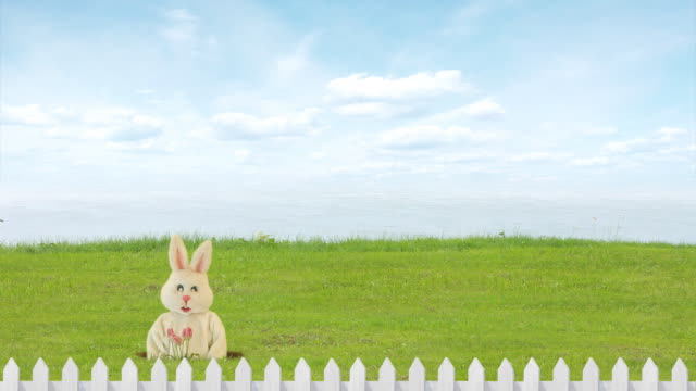 Easter Rabbit video