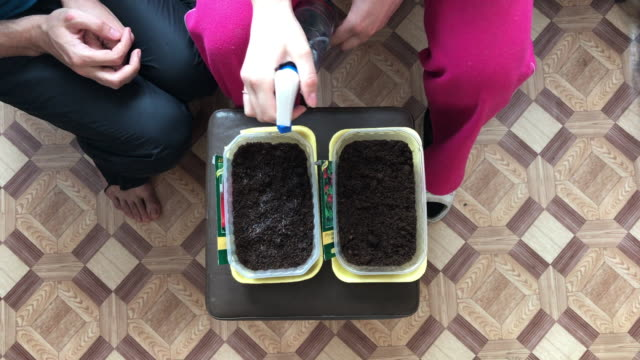 Eastern Europe: Lifestyle. Spring planting seeds for seedlings. video